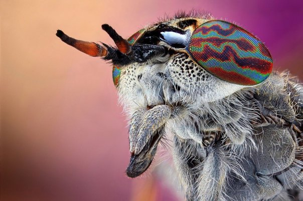amazing-macro-insect-photography-by-dusan-beno-photos-015