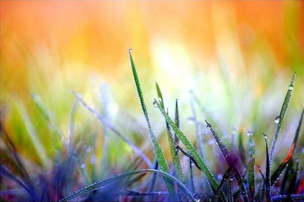 glorious-macro-photography-of-nature-by-magdalena-wasiczek-27