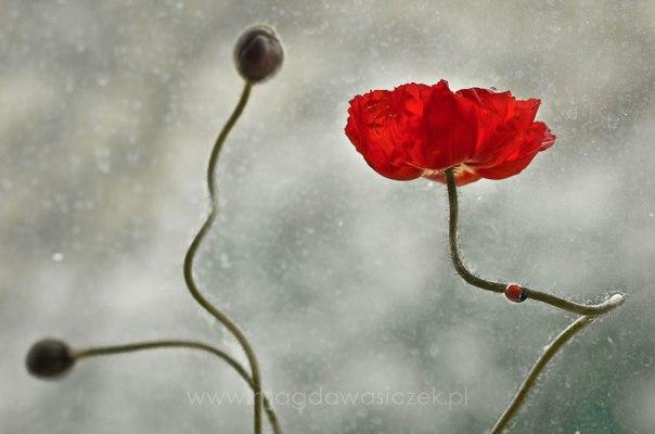 macro-photography-magda-wasiczek-4