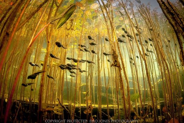 tadpole-swarm