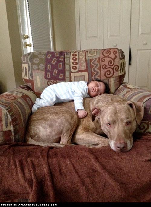 baby-and-pitbull