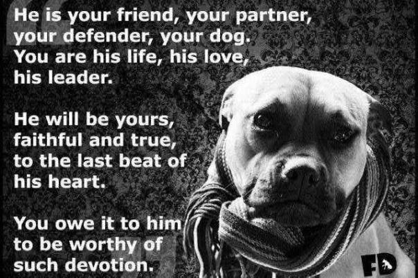 Pitbull Dog Quotes My Favourite Pit Bull Quotes  Alyzen Moonshadow