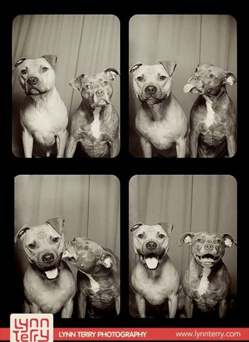 pitbull-photo-booth-fun